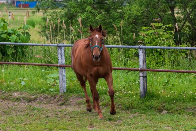 四本足で走る馬