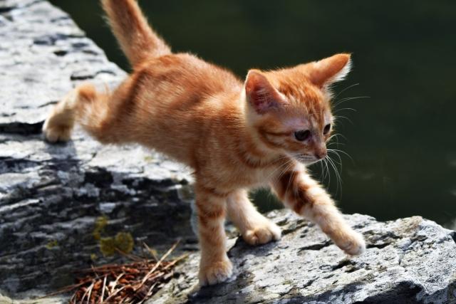 四つ足で歩く猫