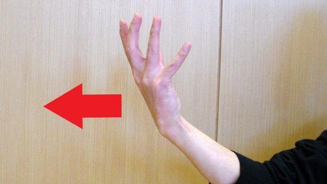 中国拳法の手型の一つである背掌の写真